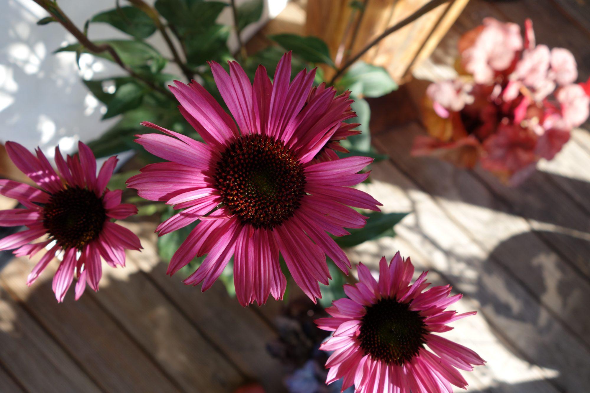 die Blume am Wasserturm